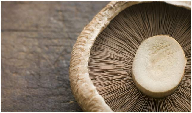 portobello mushrooms are high in vitamin d