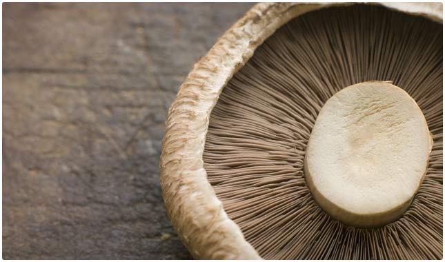 portobello mushrooms are high in vitamin d