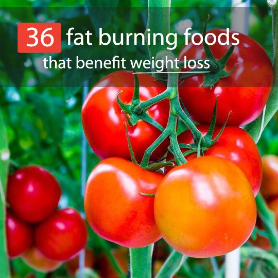 fat burning foods feature
