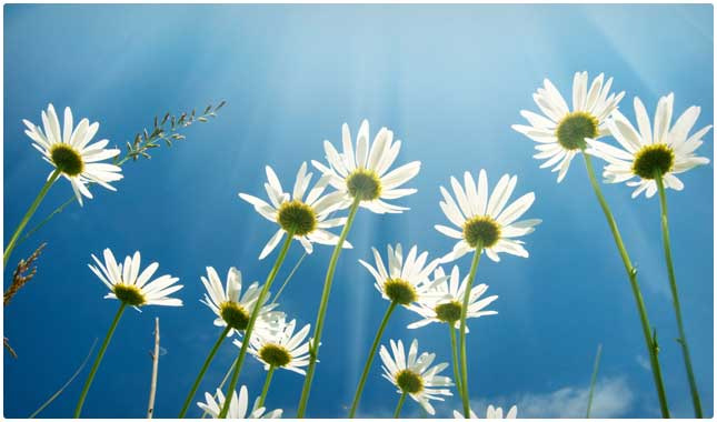 smell the daisies