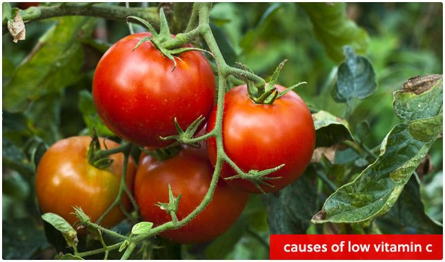 causes of low vitamin c