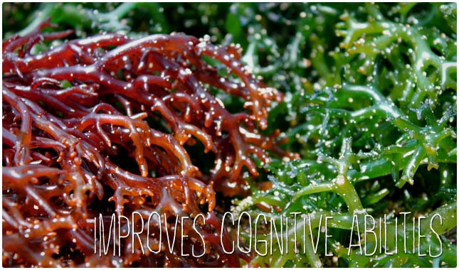 iodine improves cognitive abilities