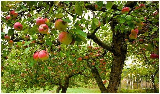 apples for long lasting energy