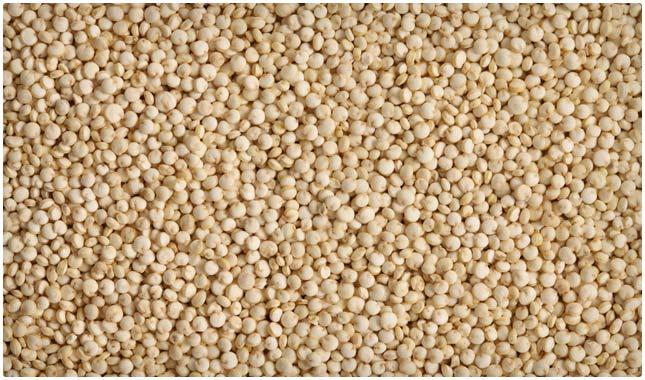 raw quinoa