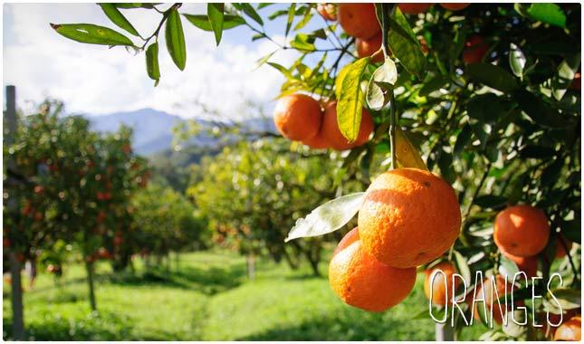 oranges for heart health