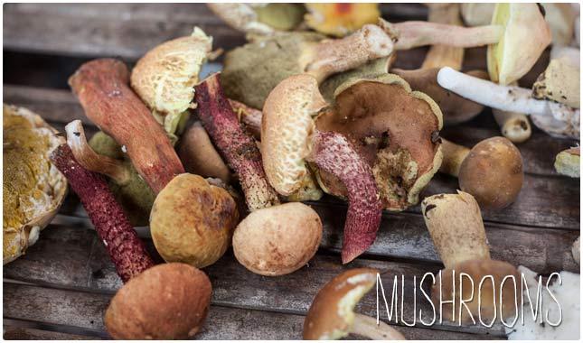 mushrooms are high in biotin