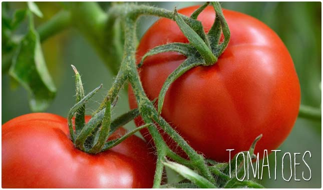 tomatoes are rich in antioxidants