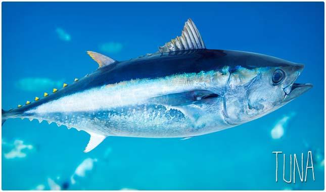tuna and selenium