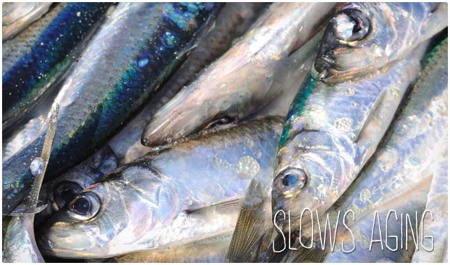 fish oil slows aging