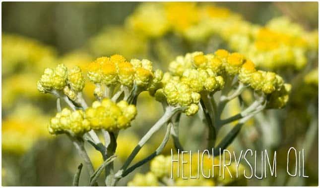 helichrysum detox essential oil