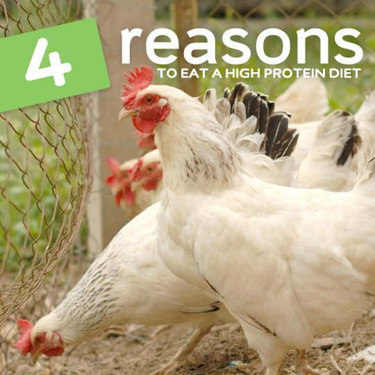 Here are four really good reasons why you may want to eat more protein…