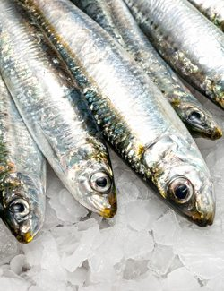 Sardines are Calcium Rich