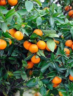 Vitamin C for Long Lasting Energy