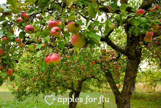 Apples for Flu
