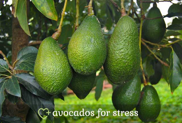Avocados for Stress