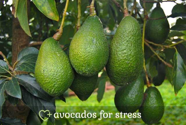 Avocados for Stress