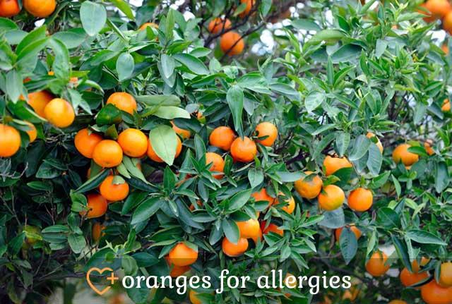 Oranges for Allergies