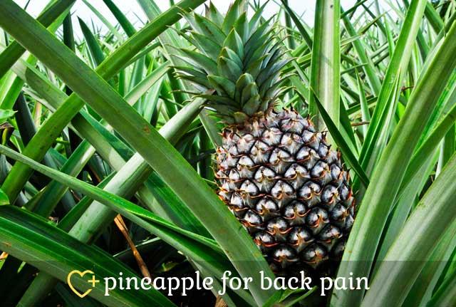 Pineapple for Back Pain