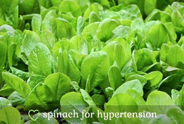 Spinach for Hypertension