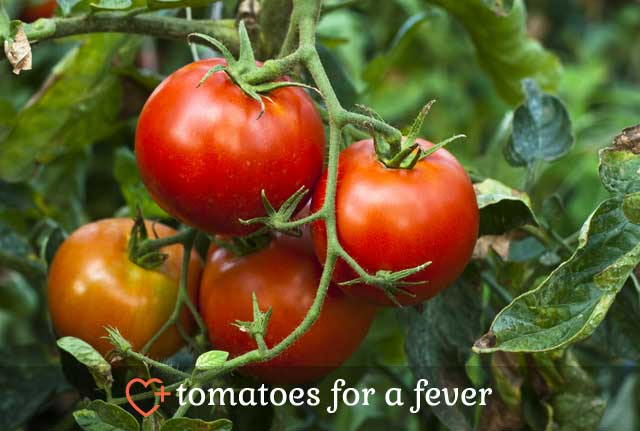 Tomatoes for Fever