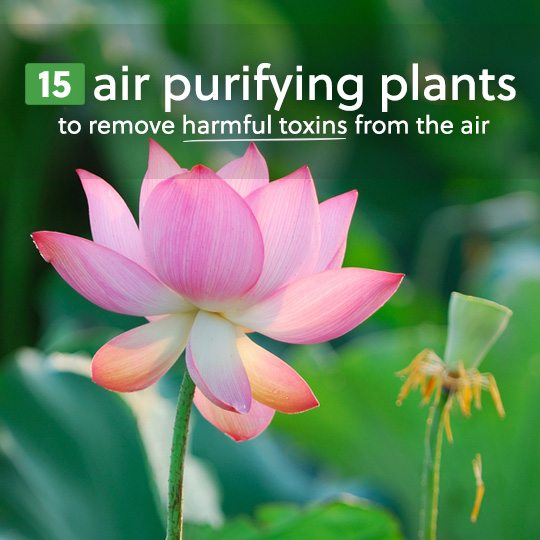 Detoxify your indoor air with these air purifying houseplants…