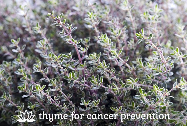 Thyme for Cancer Prevention