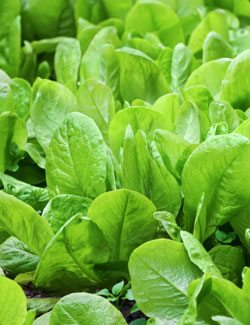 spinach is potassium rich