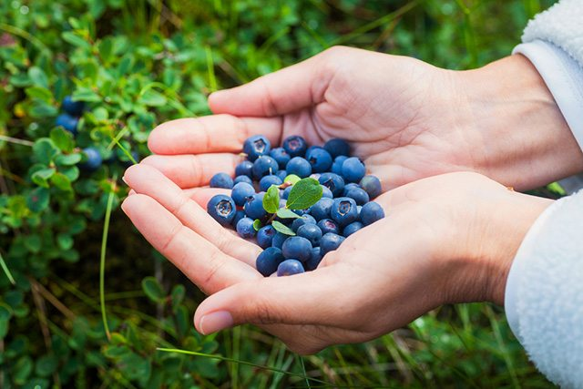 blueberries to boost metabolic rate