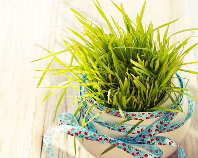 grow wheatgrass