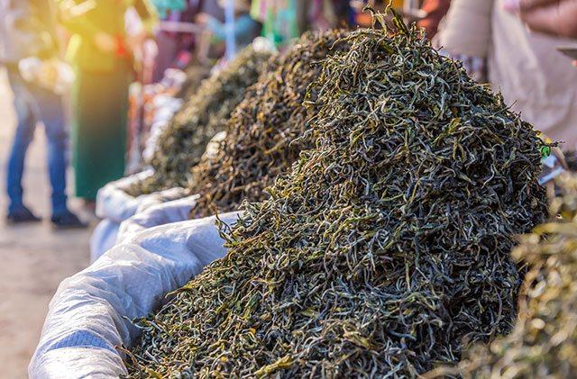 Dry tea for kombucha