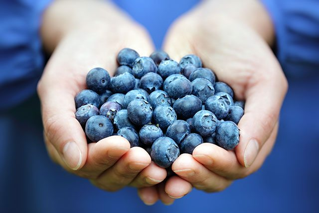 Blueberries for memory