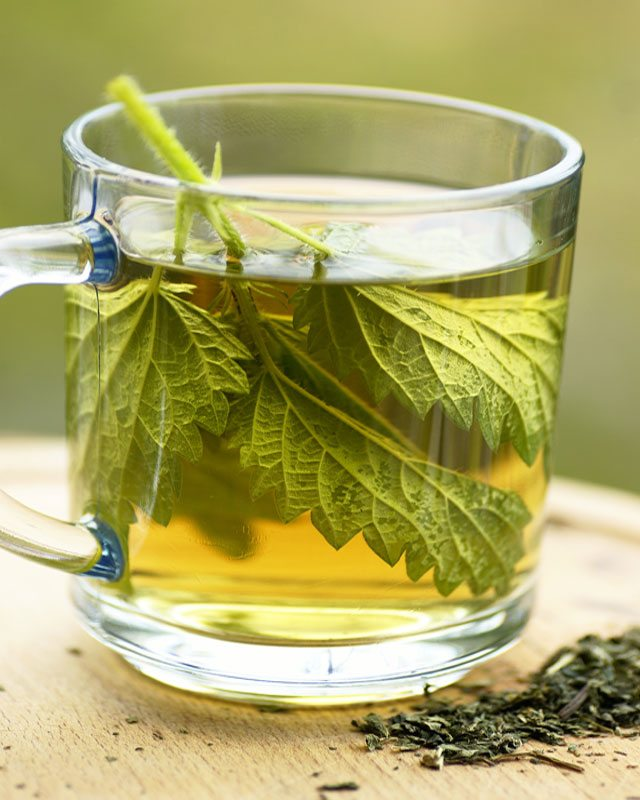 stinging nettle tea fertility