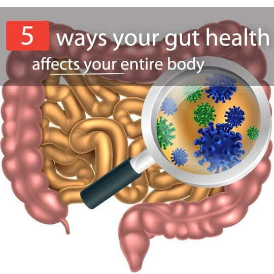 gut bacteria affects body