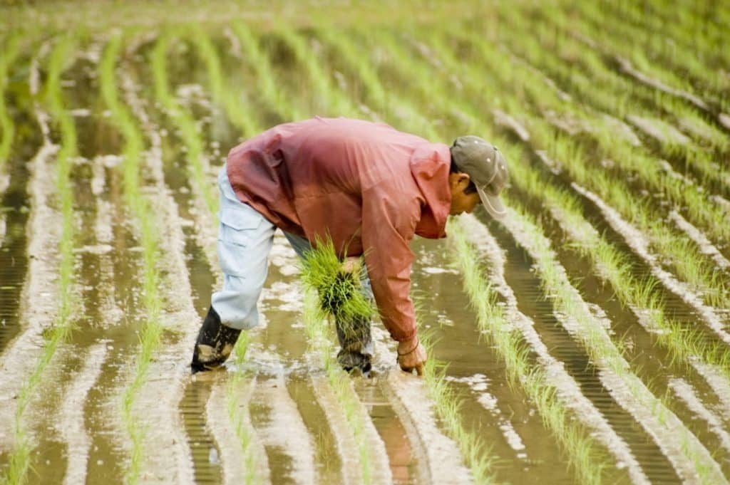 Okinawan farmer