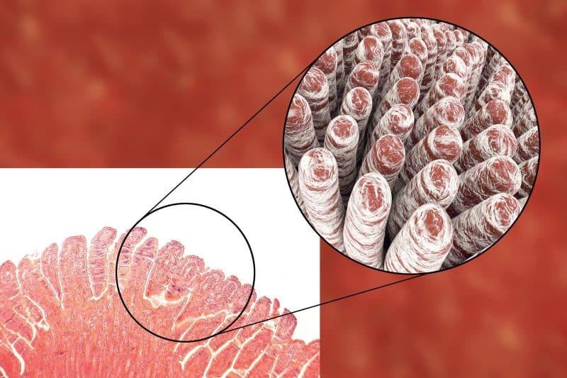 Bone broth for leaky gut