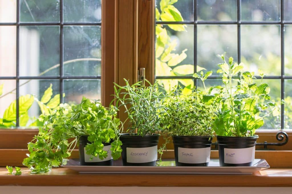 how to grow your own herbs even if you live in a topfloor, Beautiful flower