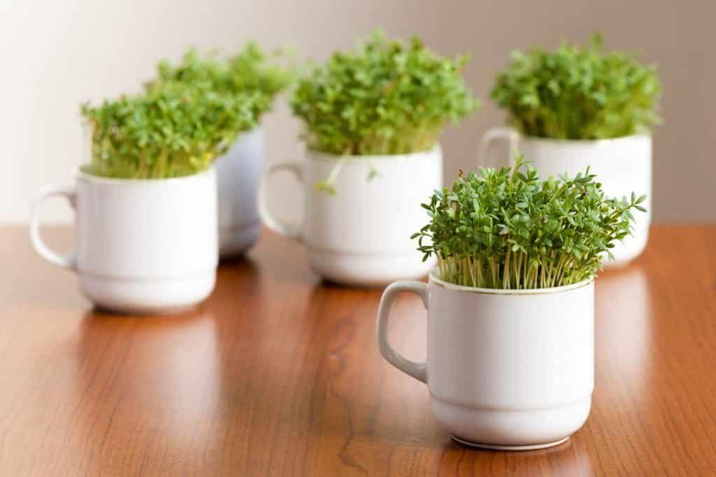 Storing herbs