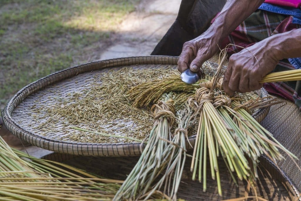 Preparing rice