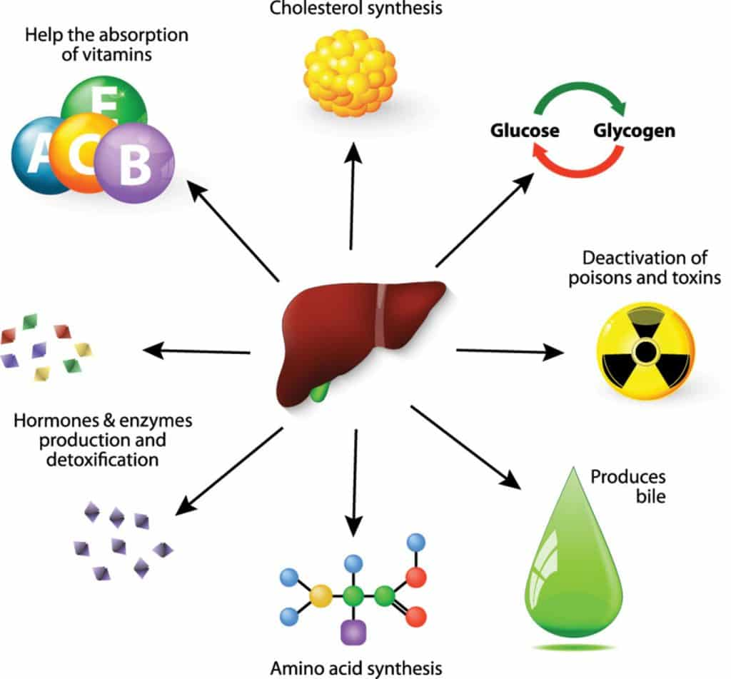 Liver detox do you need it how to do it safely effectively take home message the liver plays hundreds of important roles one of its major functions is to act as a filter that helps the body eliminate substances ccuart Gallery