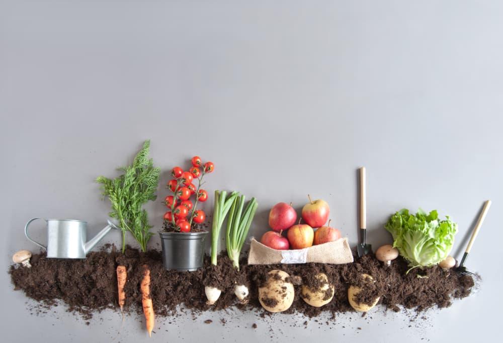 Organic foods fibroids natural treatments